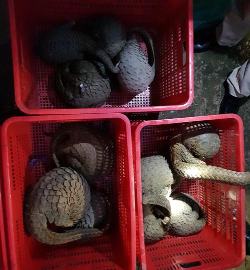 Truy quét các đường dây buôn bán động vật hoang dã xuyên quốc gia