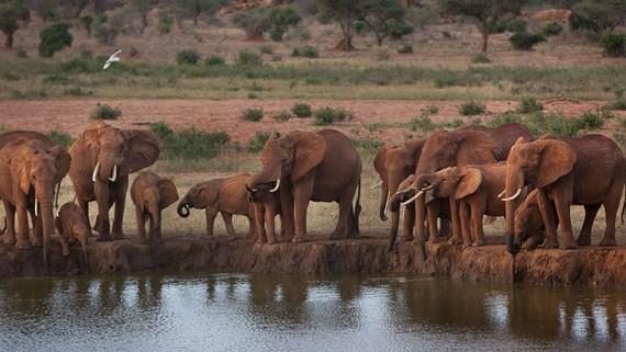 Ứng dụng kỹ thuật số để giám sát động vật hoang dã