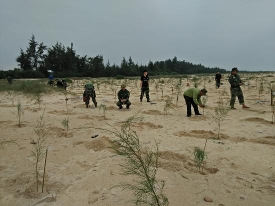 Trồng 22.000 cây phi lao chắn sóng tại bờ biển thị trấn Thuận An