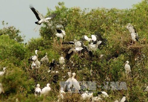 Vườn quốc gia Tràm Chim phát triển du lịch theo hướng bền vững