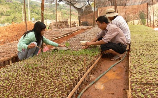 Xây dựng Vườn bảo tồn và phát triển dược liệu quý hiếm ở Kon Tum