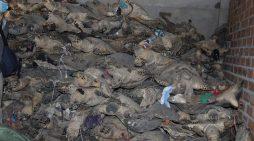 Vụ án tàng trữ rùa biển lớn nhất thế giới: Vì sao dừng phiên tòa lần thứ 3?