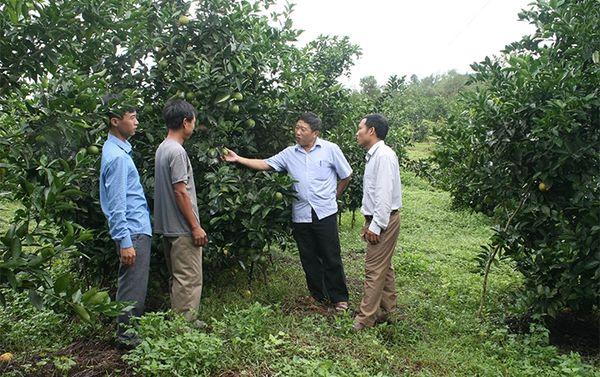 Hà Tĩnh tái cơ cấu ngành nông nghiệp thích ứng biến đổi khí hậu