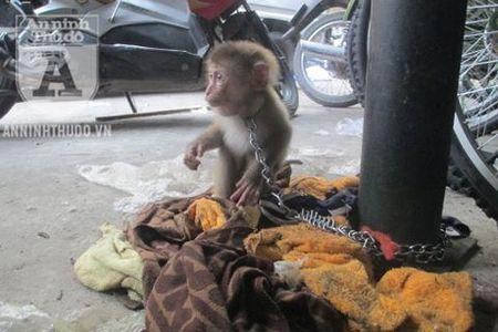 """Trung tâm Cứu hộ động vật hoang dã Hà Nội: Ít xe nên """"từ từ"""" cứu hộ?"""
