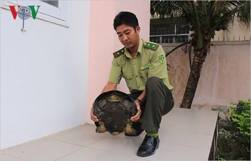 Bắt được rùa răng quý hiếm nặng 11 kg, thả về môi trường tự nhiên