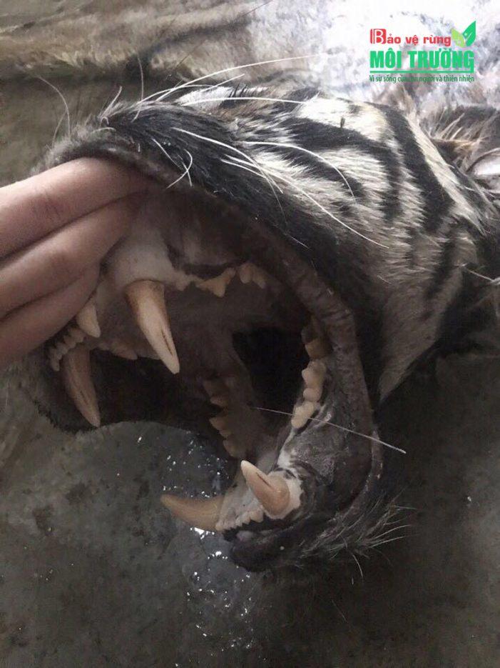 """""""Khai quật thế giới ngầm"""" buôn bán đông vật hoang dã ở Việt Nam – Kỳ 4"""