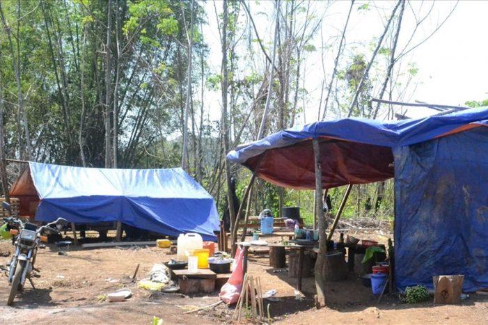 Đắk Nông: Nhiều đối tượng phá rừng ngay trước tết