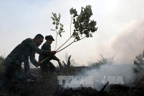 Cháy rừng lan rộng tại 4 tỉnh, Indonesia ban bố tình trạng khẩn cấp