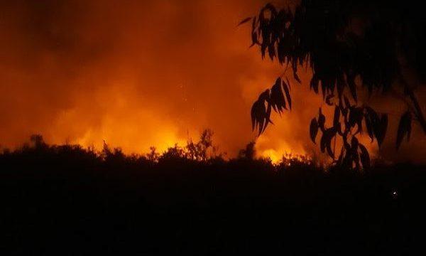Rừng tràm giữa đêm phát hỏa, hơn 7 giờ mới dập tắt