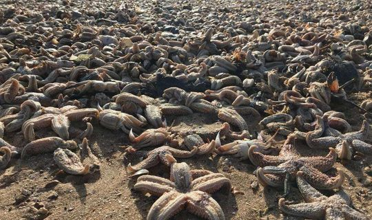 Bờ biển Anh ngồn ngộn xác chết sinh vật biển