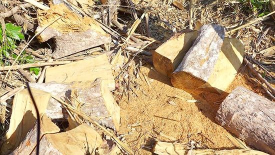 Rừng Tây Nguyên sau lệnh đóng cửa vẫn bị tàn phá