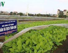"""""""Loạn"""" cửa hàng bán sản phẩm nông nghiệp hữu cơ"""