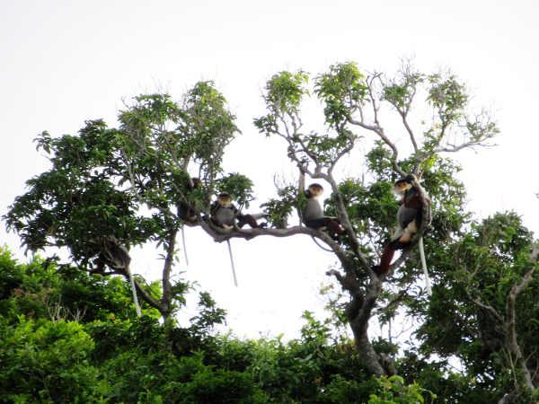 Khi du lịch đại trà xâm lấn rừng đặc dụng: Góc nhìn từ Sơn Trà