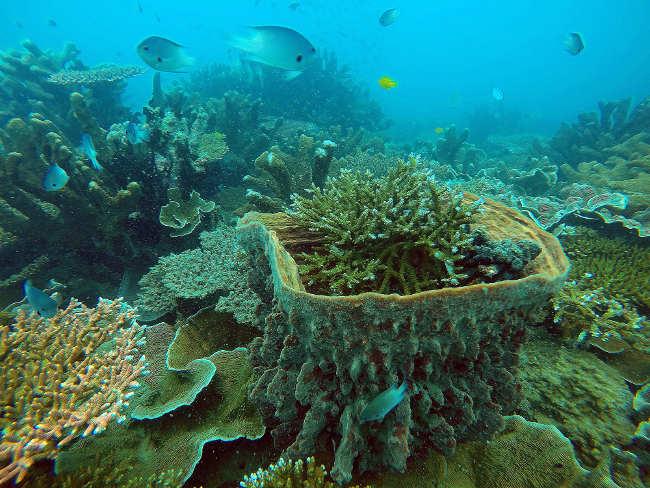 Hệ thống bảo tồn biển: Định hướng mở rộng và giải pháp đồng quản lý