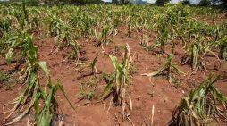 Châu Phi lần đầu đăng cai hội nghị thế giới về biến đổi khí hậu