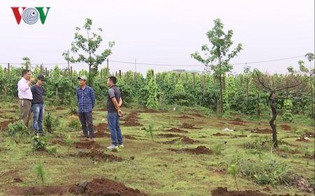 Hàng chục nghìn m2 đất rừng ở Gia Lai thành đất tư chia cho cán bộ