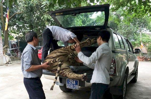 Chuyển giao tiêu bản hổ về Bảo tàng Thiên nhiên Việt Nam