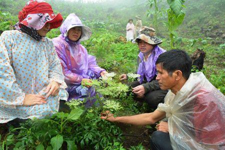 Kon Tum phấn đấu trở thành vùng dược liệu trọng điểm quốc gia