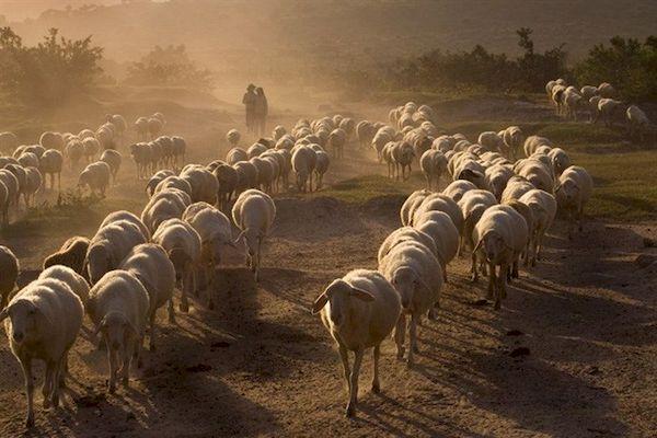 Mùa khô kéo dài đến tháng 9/2018: Giải pháp nào cho Ninh Thuận?