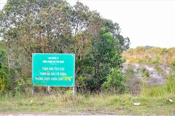 Kiên Giang: Thành lập đoàn kiểm tra, xử lý nạn chặt phá và lấn chiếm đất rừng Phú Quốc