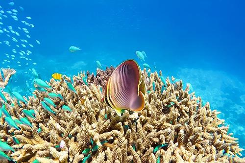 Phát hiện rạn san hô khổng lồ rộng 56.000 km2 ngoài khơi Brazil