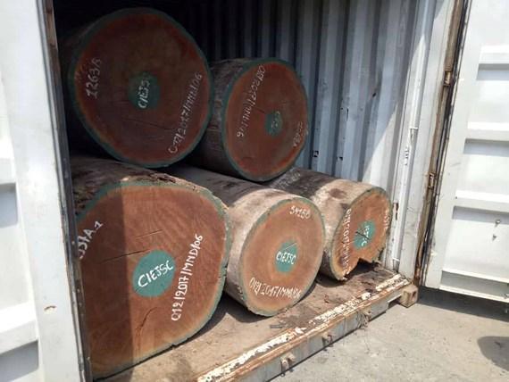 Phát hiện 7,3 tấn nghi vảy tê tê ngụy trang trong các khúc gỗ ở cảng Cát Lái