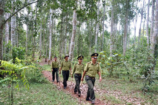 Hỗ trợ bảo vệ rừng