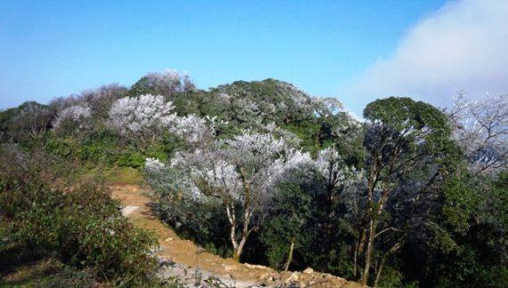 Thành lập Vườn quốc gia Phia Oắc – Phia Đén ở Cao Bằng