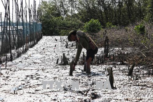 Cà Mau: Yêu cầu kiểm điểm cá nhân, tập thể để xảy ra phá rừng lấy đất nuôi tôm