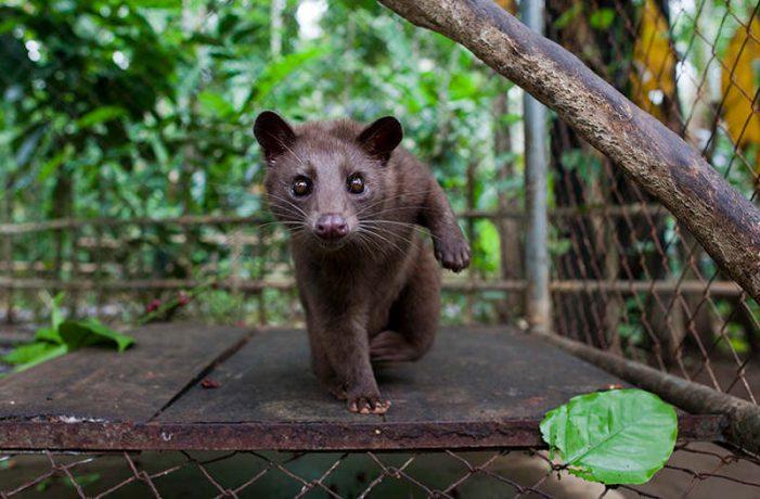 Nuôi động vật hoang dã có thực sự vì bảo tồn?