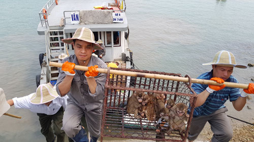Trung tâm Cứu hộ động vật hoang dã Hà Nội: Chốn bình yên của các loài động vật hoang dã quý hiếm