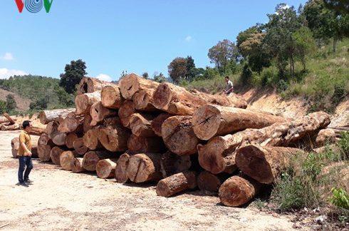"""Gỗ bị khai thác trái phép ở nơi """"giữ rừng tốt nhất Kon Tum"""""""