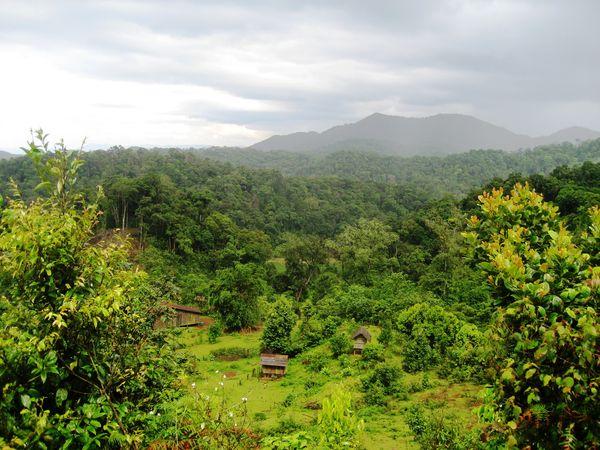 Từ rừng Tây Nguyên đến chính sách lâm nghiệp cộng đồng