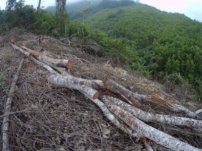 Nghi vấn phá rừng núp bóng danh nghĩa trồng mới ở vùng cao Võ Nhai