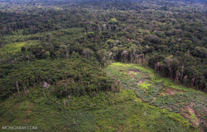 Sức khỏe của rừng phụ thuộc vào mức độ phát triển kinh tế