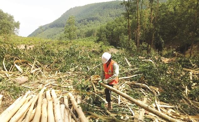 Chứng chỉ xanh tỷ USD cho ngành gỗ Việt Nam