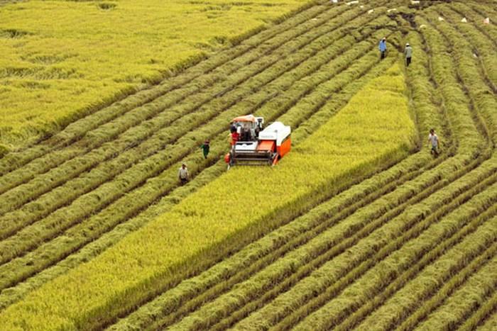 Bộ trưởng Nguyễn Xuân Cường lo ngại 3 thách thức khiến nông nghiệp Việt Nam khó bứt phá