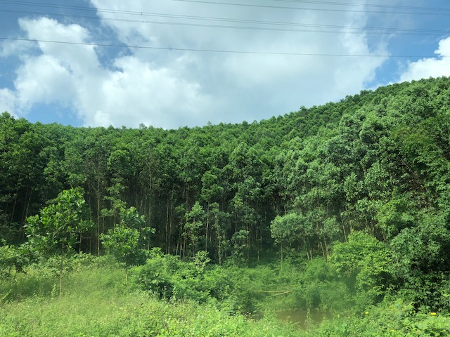 Thủ tướng chủ trì Hội nghị về phát triển chế biến gỗ và lâm sản xuất khẩu