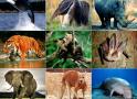 Truy cứu trách nhiệm hình sự với hành vi tàng trữ động vật hoang dã, quý, hiếm