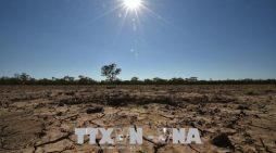 Nông dân Australia chống chọi với hạn hán nghiêm trọng