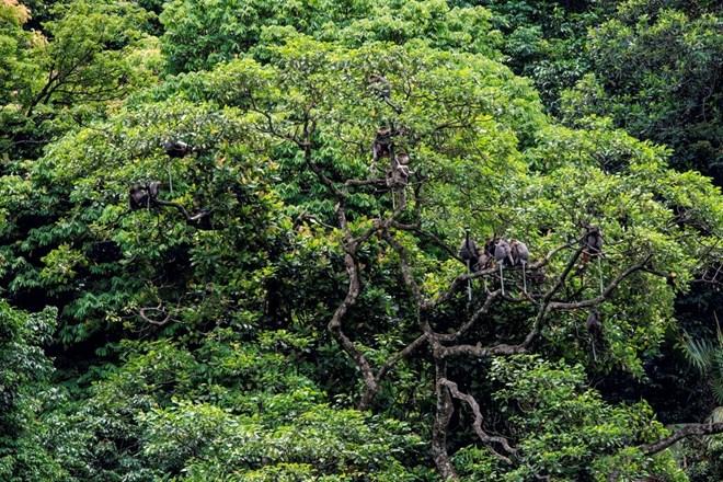 Phê duyệt Ðề án Quản lý rừng bền vững và Chứng chỉ rừng