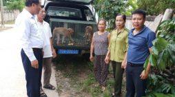 Người dân tự nguyện giao nộp 2 cá thể khỉ đuôi lợn quý hiếm