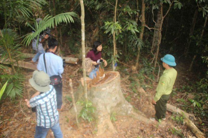 UBND Bình Định yêu cầu báo cáo kết quả xử lý phá rừng trước 15.9