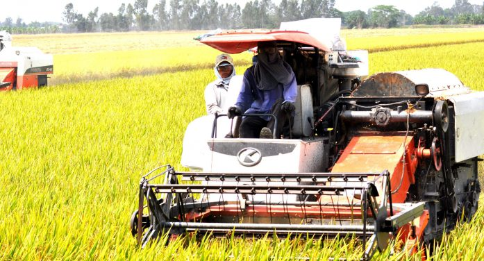 """Tâm lý nông dân Việt """"dễ dãi"""", liệu nông nghiệp có bền vững?"""