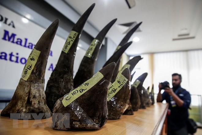 Hải quan Malaysia thu giữ lượng sừng tê giác lớn nhất từ trước tới nay