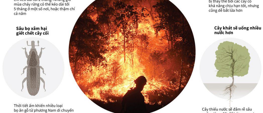Biến đổi khí hậu khiến cháy rừng tồi tệ như thế nào?