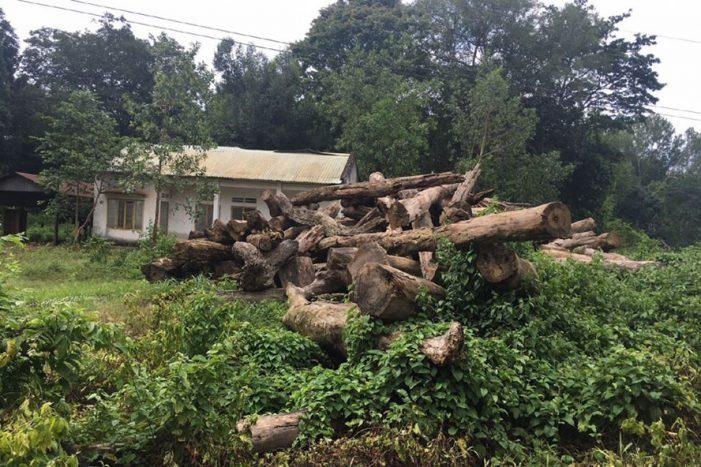 Bình Phước: Hé lộ dấu hiệu sai phạm sử dụng 233,8ha đất rừng