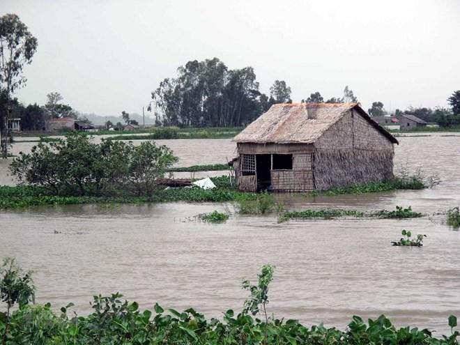 Mực nước sông Cửu Long đang lên, nguy cơ ngập lụt vùng trũng