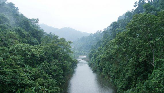 Hoàn thiện đề án thành lập Khu bảo tồn thiên nhiên Động Châu – Khe Nước Trong