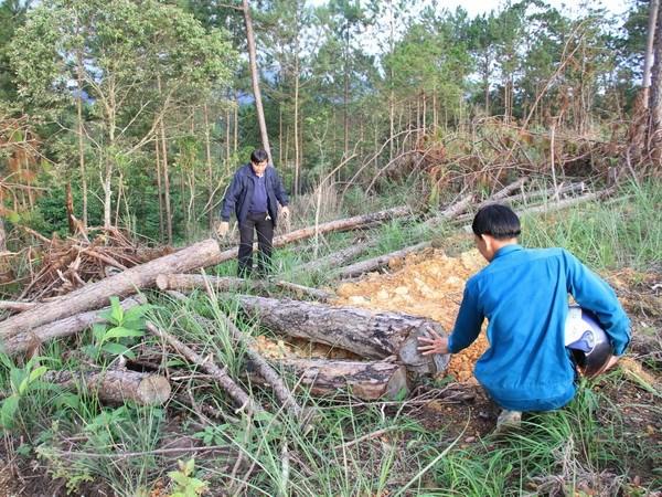 Vụ phá rừng tại Lâm Đồng: Tạm đình chỉ công tác Phó Chủ tịch UBND xã